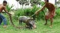 Facebook: Anaconda estuvo por devorar a cerdo, pero ocurre lo inesperado[VIDEO]