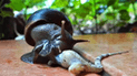 Facebook: graban momento exacto en que un caracol devora indefensa lagartija [VIDEO]