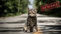 Cementerio de Mascotas: Liberan primeras imágenes del remake [FOTOS]