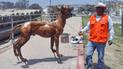 Chiclayo: reparan esculturas del Paseo Yortuque