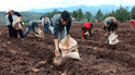 Agricultores liberteños recibirán 4 mil toneladas de abono