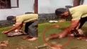 Facebook: Serpiente se come 'almuerzo' de señor y él recurre a insólito método para recuperarlo [VIDEO]