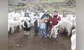 Gobierno Regional de Huancavelica consolidó acopio y venta de fibra de alpaca