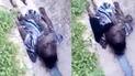 Sobrevive a un accidente pero es estrangulado por su serpiente [VIDEO]