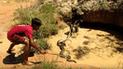 YouTube viral: niños se enfrentan contra temible anaconda para defender a 'monito' [VIDEO]