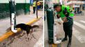 La Libertad: Policía instaura dispensador de comida para perros callejeros
