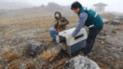 Junín: zorro andino fue liberado con éxito por el personal de Servicio Nacional Forestal [Video]