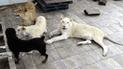 YouTube: conmoción en México porque empresario cría tres leones africanos en el techo de su casa [VIDEO]