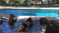 YouTube: Mamá oso y sus crías llegan a una mansión y hacen travesuras frente a todos