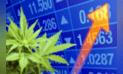 La marihuana tocará la puerta de la Bolsa de Valores de Lima
