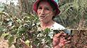 Satipo: 15 agricultores son perjudicados por granizado que afecto cultivos