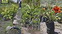 Inició la venta de diversas plantas desde S/ 1 en Cusco