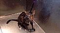 YouTube viral: Gato pide a su dueña que no lo bañe más [VIDEO]