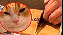 Vía Facebook: 'Gato cocinero' ayuda a su amo a cortar cebollas y termina llorando
