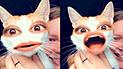 Facebook Viral: Miles de usuarios no dejan de reír tras ver a gato usar divertidos filtros