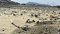 Trujillo: presuntos traficantes de terrenos invaden cementerio de Mampuesto
