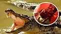 YouTube viral: queda aterrado al encontrar enorme cocodrilo tomando un baño en el 'jacuzzi' de su casa [VIDEO]