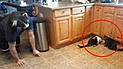 Facebook: Dueño le juega broma pesada a sus gatos y ellos reaccionan de la forma menos pensada [VIDEO]