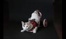 La vida con mascotas discapacitadas