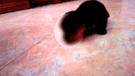 Facebook viral: miles aterrados por el nacimiento de un perro con dos cabezas en Perú [VIDEO]