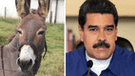 YouTube: Nicolás Maduro enfrenta a periodista que preguntó sobre video que lo compara con un burro [VIDEO]