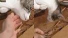 Facebook viral: halla a su gato 'muerto', intenta reanimarlo y sucede lo increíble [VIDEO]