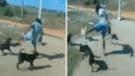 Facebook: Hombre ebrio se cree 'Jackie Chan' y tiene fuerte enfrentamiento con perros