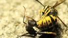 Facebook: Avispa tiene duelo a muerte con una hormiga y desenlace hace temblar a todos