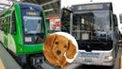 Conoce las indicaciones para viajar con tu mascota en el Metropolitano y Metro de Lima