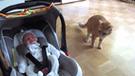 YouTube: Gato ve por primera vez a un bebé y tiene extraña reacción frente a todos