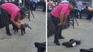 YouTube Viral: dueño disfraza a su perro de elefante y este sorprende con su actitud [VIDEO]