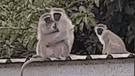 Facebook: Mono se reencuentra con su mamá luego de varios días y ocurre lo impensado