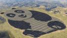 China construye planta de energía solar con forma de panda