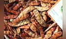 Exportaciones de tara crecen 19% hasta agosto