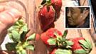 ¿Por qué una mujer escondió agujas entre las fresas de Australia?