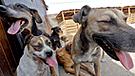 Patatón: La primera teletón canina que busca recaudar una tonelada de alimento