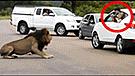 Vía Facebook: preciso instante en que león casi devora a dos niños que lo molestaron con sus cámaras [VIDEO]