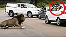 Facebook viral: niños que disfrutaban de safari quedaron aterrados por reacción de león [VIDEO]