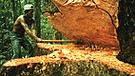 Noruega entregará US$ 230 millones a Perú para reducir deforestación de la Amazonía