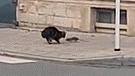Facebook: Tímido gato ataca a una rata karateka y recibe su merecido