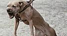 España: perro ataca a su dueño para impedir que agreda a su novia
