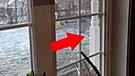 YouTube viral: quedó aterrado al saber que una insólita criatura había tocado el timbre su casa