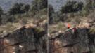 Doce perros y un ciervo caen al abismo durante cacería que indigna a España [VIDEO]