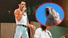 Facebook viral: roedor canta famosa canción de Freddy Mercury e impacta a las redes [VIDEO]