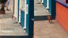 Facebook: perro chihuahua es regañado por su dueña tras haberse escapado de su casa