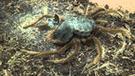 YouTube viral: dueño de tarántula graba a su mascota quitándose su exoesqueleto [VIDEO]