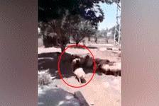 Monta oveja como si fuera un caballo, pero 'karma' se hace cargo y lo avergüenza [VIDEO]