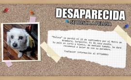 Surquillo: familia ofrece recompensa para encontrar mascota
