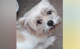 SJL: buscan a mascota que fue robada en puerta de vivienda