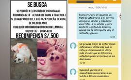 Pachacámac: piden dinero a familia a cambio de mascota perdida